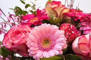 roses-279171_1280
